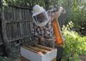 Albinel Firescu - Melliris Beekeeper (1)