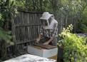 Albinel Firescu - Melliris Beekeeper (15)