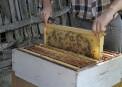 Albinel Firescu - Melliris Beekeeper (17)