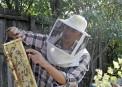Albinel Firescu - Melliris Beekeeper (19)
