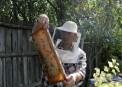 Albinel Firescu - Melliris Beekeeper (2)