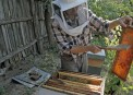 Albinel Firescu - Melliris Beekeeper (5)